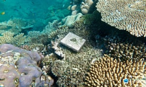 Great Barrier Reef Suffers 89 Collapse In New Coral After