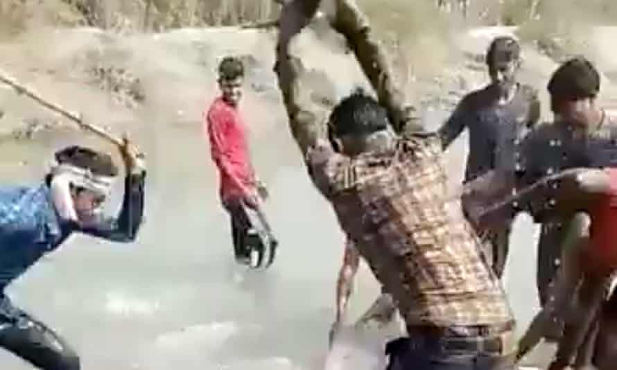 Men beating dolphin with wooden rods
