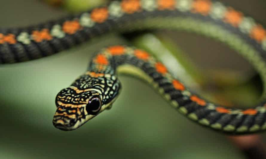 Off the scale … genetically modified snakes provide vaccines in Vonda N McIntyre's Dreamsnake.