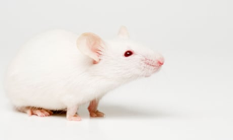 Autism symptoms replicated in mice after faecal transplants
