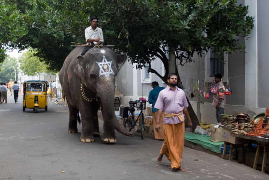 Walking the elephant to the temple in Puducherry (formerly Pondicherry), India