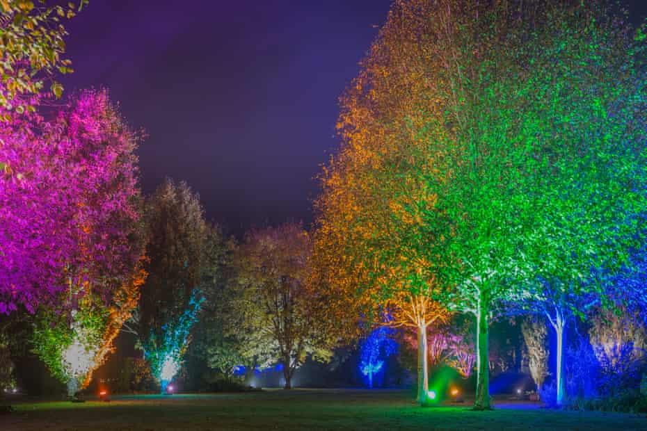 Winter Garden Illuminations at RHS Garden RosemoorChristmas at Harlow Carr