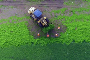 Workers cleaning algae off a beach in Qingdao, east China's Shandong province. The annual occurrence is usually caused by an abundance of nutrients in the water, especially phosphorus