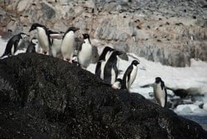 Penguin colony on Paulet Island