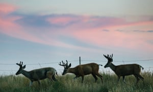 Native American leaders in Montana believe the Keystone oil pipeline would threaten the Fort Peck Indian Reservation.