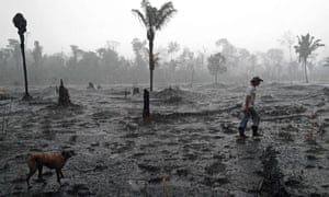A Brazilian farmer walks through a burned area of the Amazon rainforest, near Porto Velho, Rondonia state
