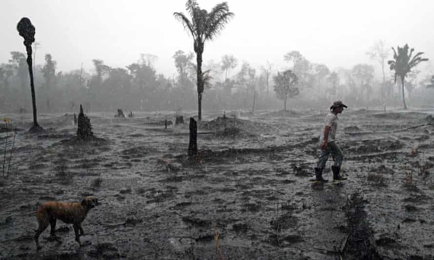 A Brazilian farmer walks through a burned area of the Amazon rainforest, near Porto Velho, Rondonia state