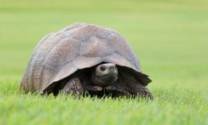 Tortoise on grass