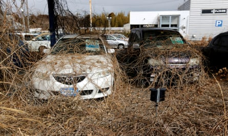 Abandoned cars are covered by weeds in Okuma in the wake of the triple disaster