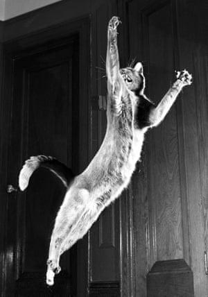 Loco leaping. Astoria, 1951