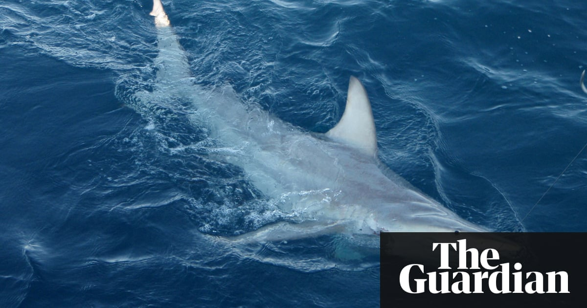 Family Of Man Killed By Shark In Tasmania Say They Oppose