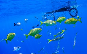 Marine life schools around a Fish Aggregating Device (FAD) in the central Pacific Ocean. Purse seine boats drop FADs at sea to attract tuna before setting nets around them, often catching everything else in the process.