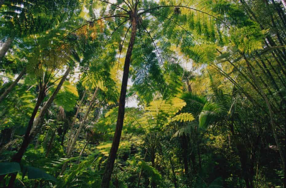 El Yunque national forest in Sierra de Luquillo, Puerto Rico