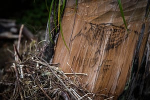 A tag to mark the territory of one of the illegal logging kingpins on Mount Mulanje