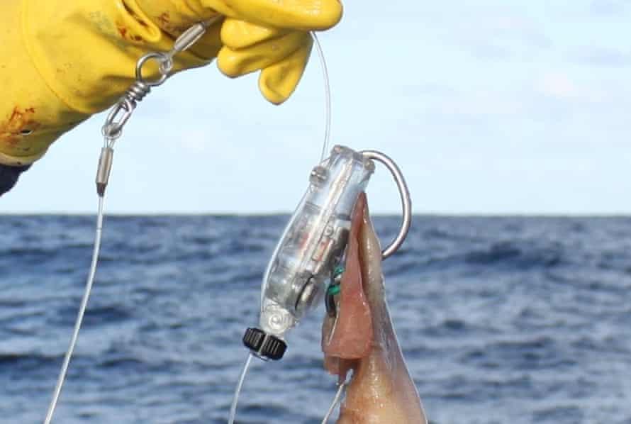 The Hookpod device