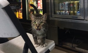 Socks – the resident cat of the Fairfield Food Market in Cleveland, Ohio – is very friendly and well known in the neighbourhood for her many toes, caused by a genetic mutation called polydactylism.