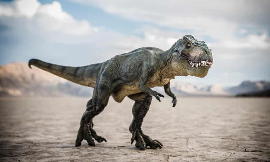 A Tyrannosaurus rex. The fossil is potentially the only such one in existence.