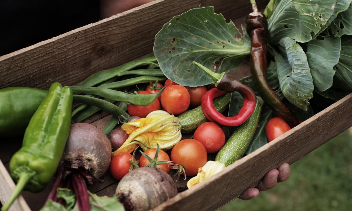 No backyard no problem how to grow your own vegetables for Grow your own vegetables