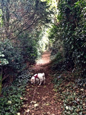 Scruff on the pathwayIn the woods at Pitsford