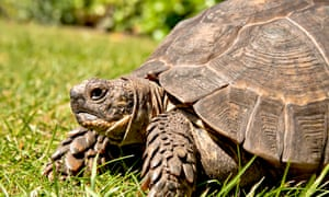 Be warned! A tortoise is for life.