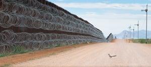 A roadrunner approaches the US-Mexico border wall at Naco, Arizona