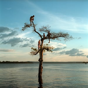 A group of boys climb a tree on the Xingu River by the city of Altamira, Brazil.