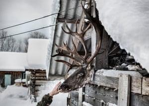 The head of a reindeer hangs in a yard