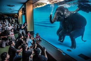 elephant swimming in tank at zoo