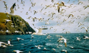 The seabird population has fallen by as much as 90% since the 1990s on the remote islands in the Atlantic.
