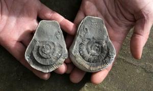 Ammonite on the beach at Saltwick Bay.