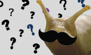 Question marks and slug with a moustache