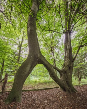 Nellie's Tree, West Yorkshire