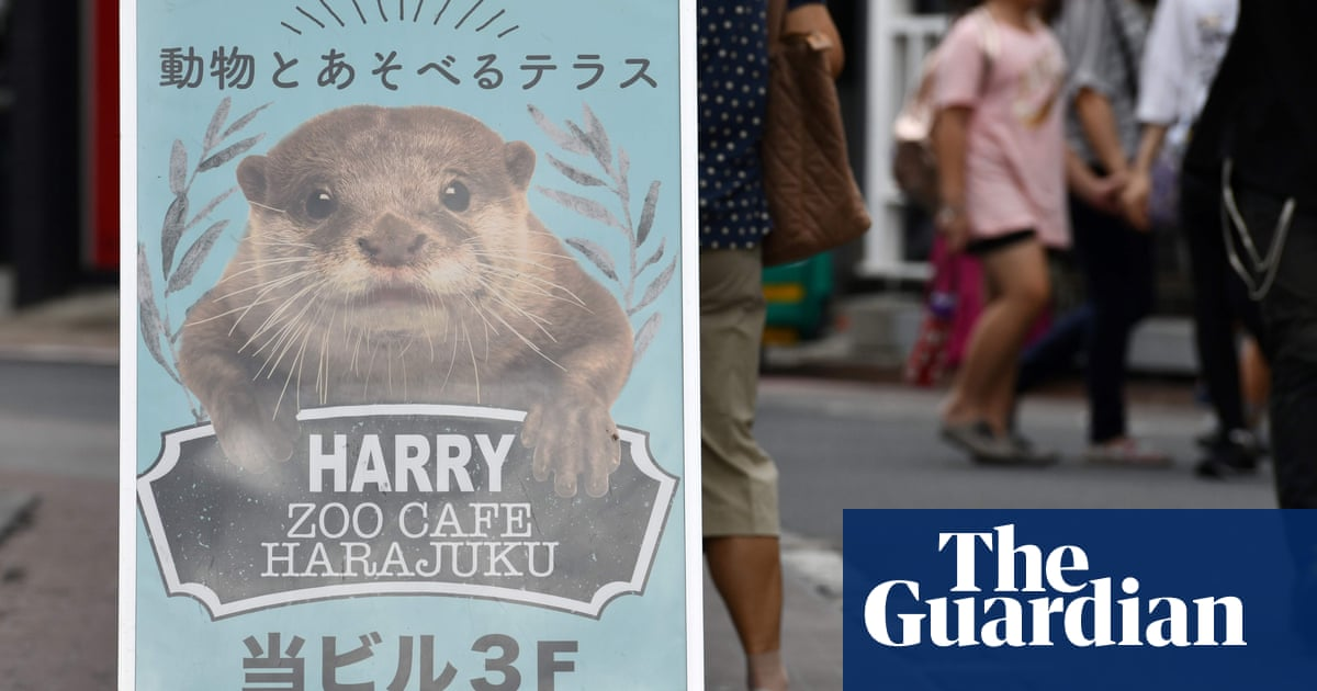 Increased protection for endangered otters after social media craze