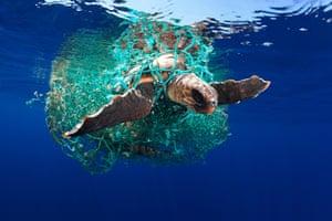 Caretta caretta turtle by Eduardo Acevedo