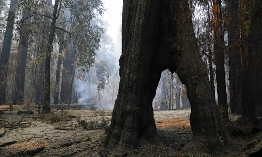 A redwood forest smolders on Monday in Big Basin Redwoods state park.