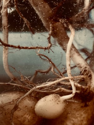 Submerged – an underwater experiment reminiscent of an umbilical cord