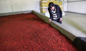 The drying room: Rosehip oil sourced sustainably and ethically from suppliers in the tiny African nation of Lesotho