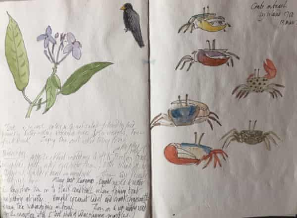 Scientific illustrations by Quentin Bone