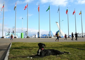 A stray dog in Sochi ahead of the 2014 Winter Olympics.
