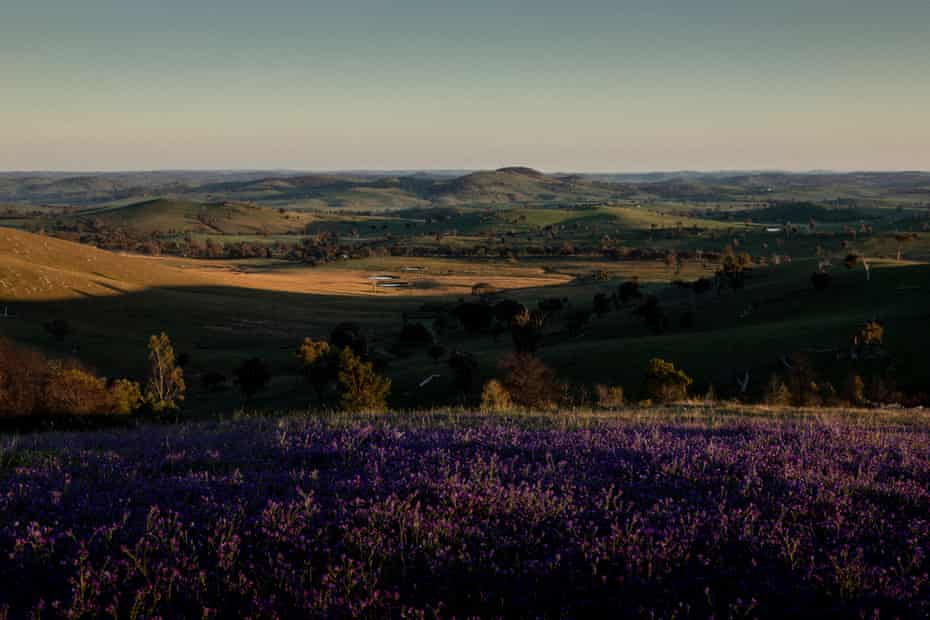 The morning view from Charlie Arnott's property in Boorowa, New South Wales.
