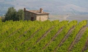 A vineyard and stone barn near Montalcino, Tuscany, Italy, Europe