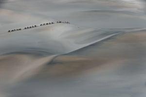 A camel train in the Gobi desert.