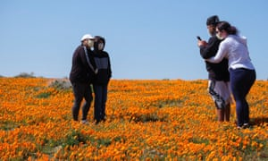 People wearing face masks take photos on a poppy field near the Antelope Valley California Poppy Reserve.