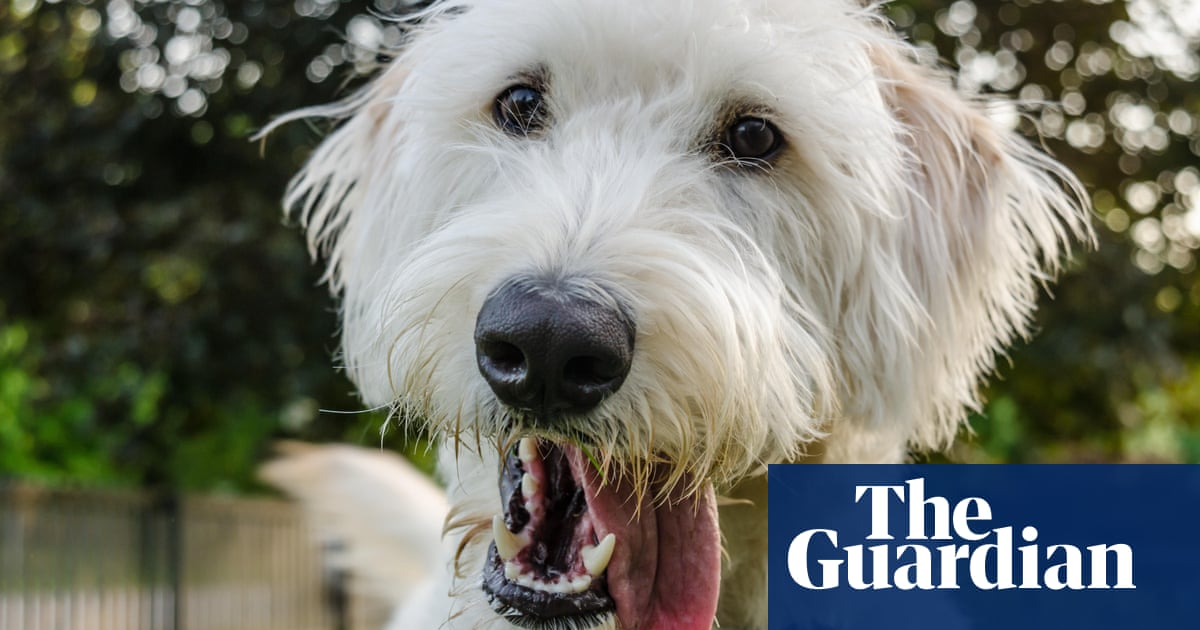 The Invention of the Modern Dog review – our long obsession with canine design