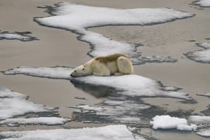A polar bear rests on ice off Russia's Franz Josef Land archipelago. Arctic sea ice is melting faster than previously thought, scientists say.