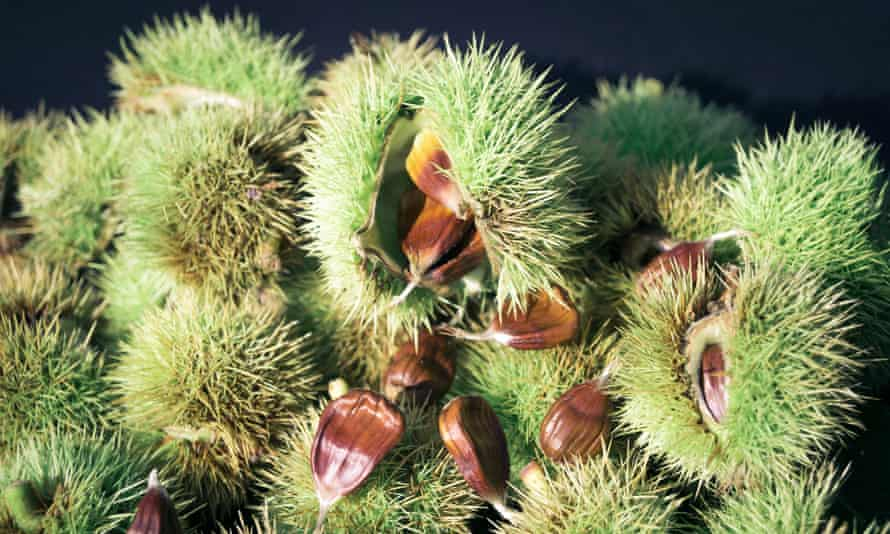 Inspired by a traditional Italian remedy, scientists have isolated a molecule found in the leaves of the European chesnut tree that can neutralise drug-resistant staph bacteria.