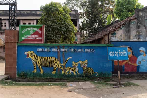 Painting of tigers outside the office of the Forest Rangers