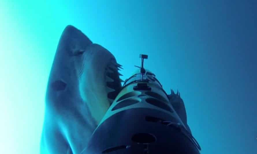 A great white shark attacks an underwater drone. Photograph: WHOI
