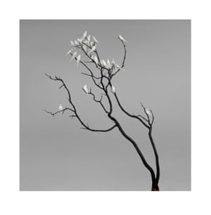 Charcoal and Ash. Photograph on archival fibre-based cotton rag paper, 2019 (dimensions variable).