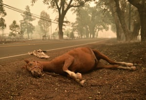 A dead horse lays on the side of a road near Middletown